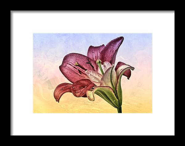 Lilie Framed Print featuring the photograph Lilies by Manfred Lutzius