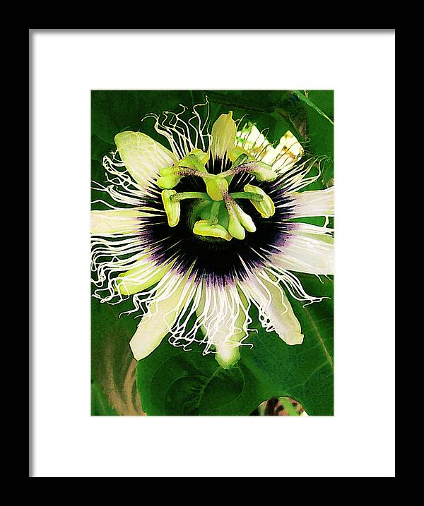 Hawaii Iphone Cases Framed Print featuring the photograph Lilikoi Flower by James Temple