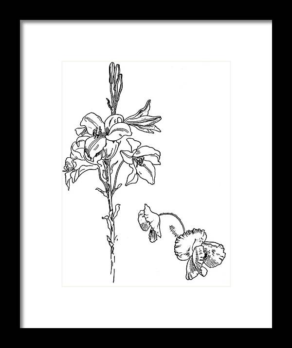 Lily And Poppy Flower Line Drawing Framed Print By
