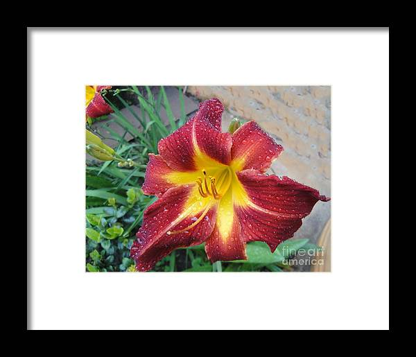 Framed Print featuring the painting Lily by Neil Trapp