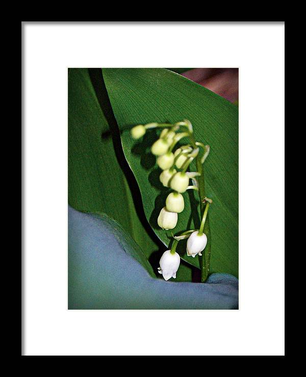 lily Of The Valley Blooms Framed Print featuring the photograph Lily Of The Valley by Cricket Hackmann