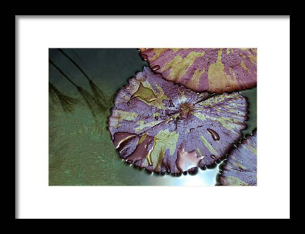 Liliy Pads And Papyrus Reflection Framed Print featuring the photograph Lily Pads And Papyrus Reflection by Viktor Savchenko