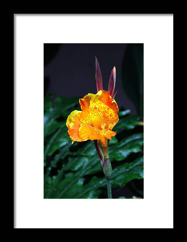 Lily Framed Print featuring the photograph Lily's Ears by Paul Anderson