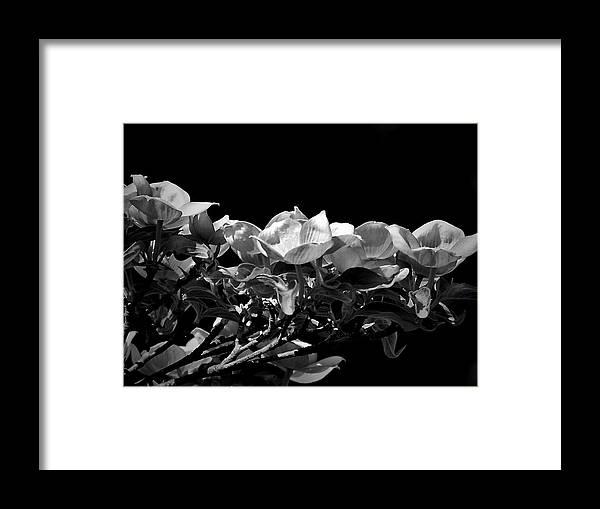 Linear Dogwood Framed Print featuring the photograph Linear Dogwood by Beth Akerman