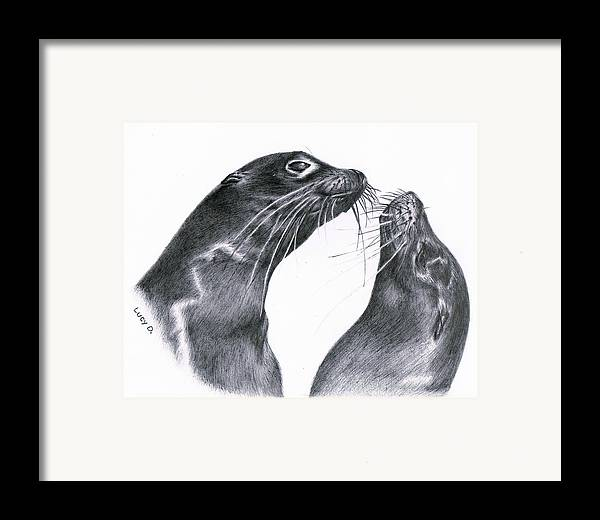 Sea Lion Framed Print featuring the drawing Lions by Lucy D
