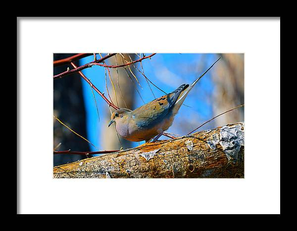 Bird Framed Print featuring the photograph Little Birdie by Brent Dolliver