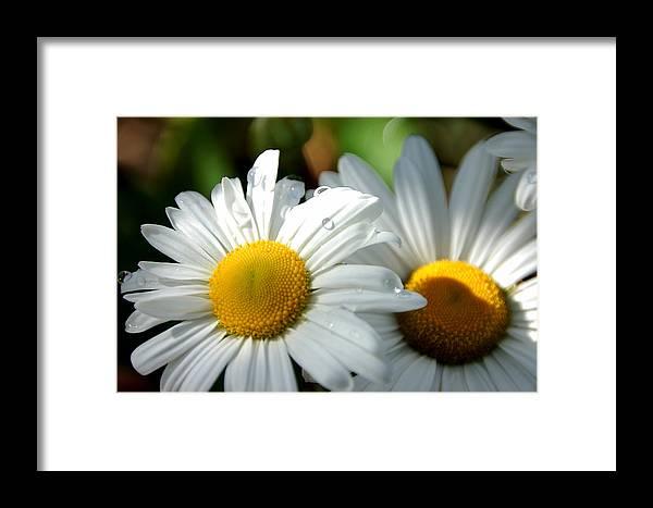 Flower Framed Print featuring the photograph Little Bit Of Sunshine by Beata Obrzut