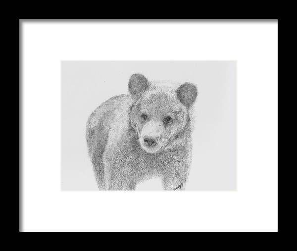 Cub Framed Print featuring the drawing Little Boo by Wendy Brunell