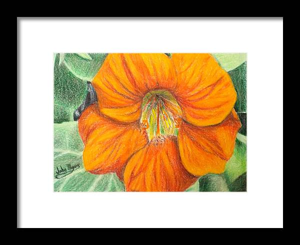 Flower Framed Print featuring the painting Little Flower by John Meyers