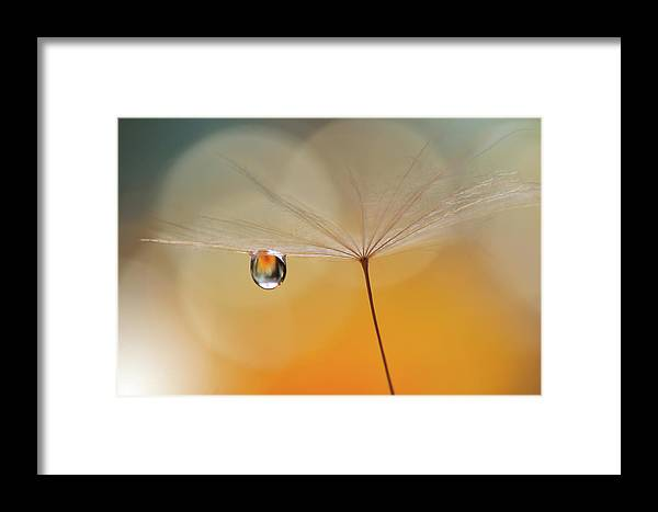 Dandelion Framed Print featuring the photograph Little Night Music... by Juliana Nan