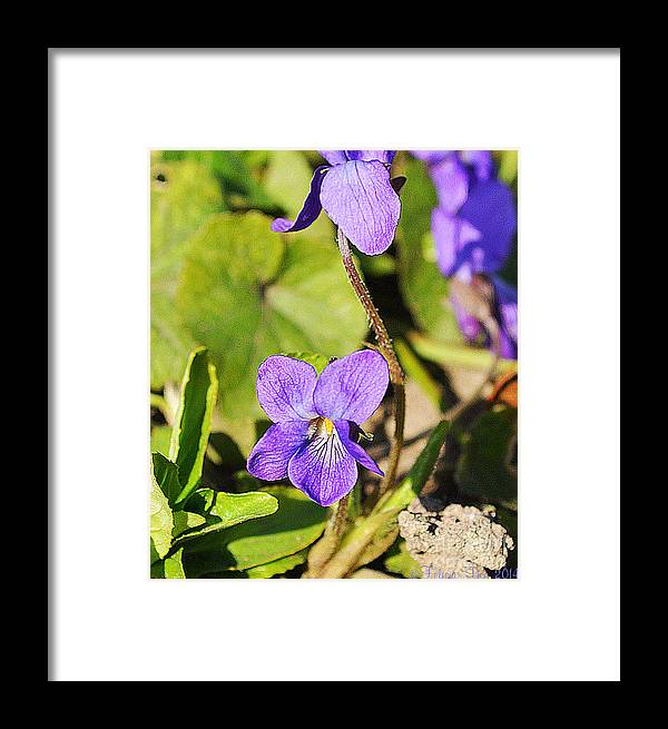 Petals Framed Print featuring the photograph Little Shine by Felicia Tica