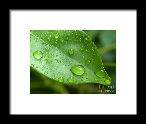 Macro Digital Photography Framed Print featuring the photograph Live Lightly On The Earth by Laura Yamada