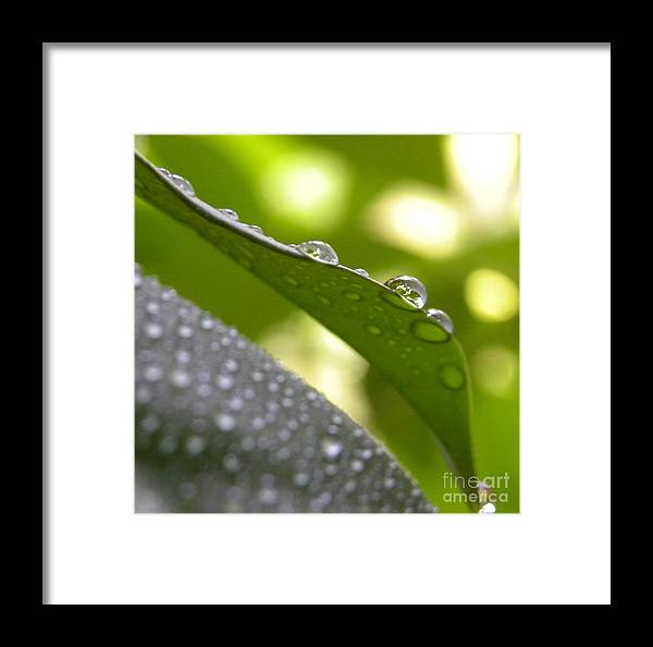 Macro Framed Print featuring the photograph Live Lightly On The Earth2 by Laura Yamada