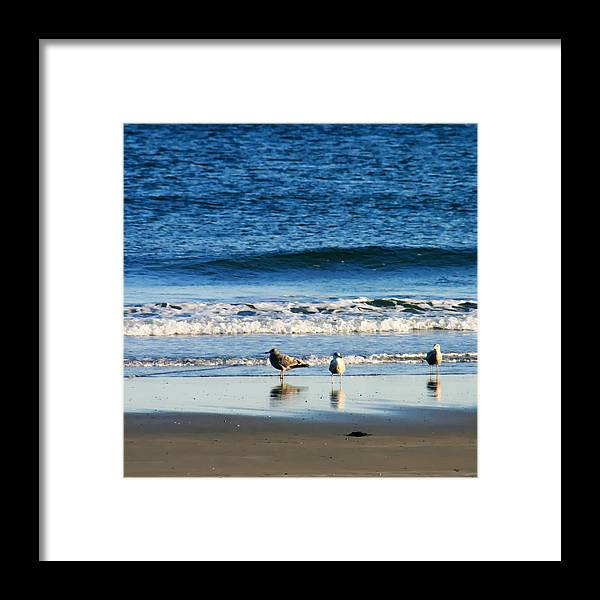 Living On The Edge Framed Print featuring the photograph Living On The Edge by Denyse Duhaime