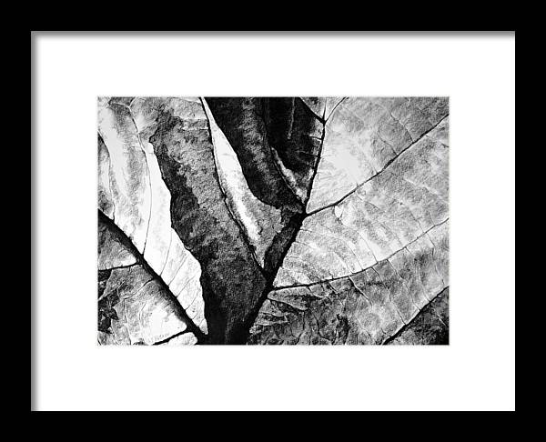 Drawing Framed Print featuring the drawing Living Structure II by Iliyan Bozhanov