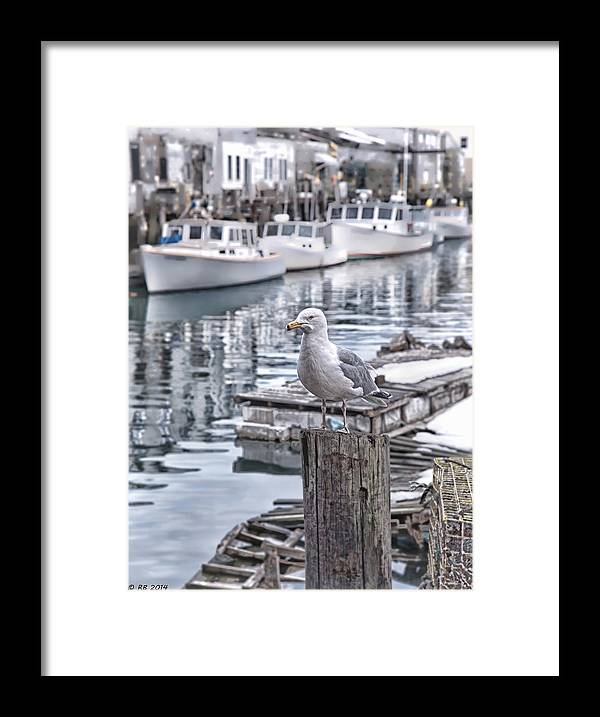 Architectural Framed Print featuring the photograph Local Resident by Richard Bean