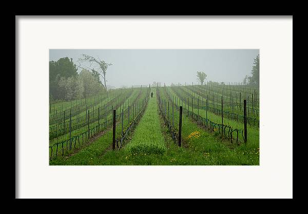 Vine Framed Print featuring the photograph Lone Figure In Vineyard In The Rain On The Mission Peninsula Michigan by Mary Lee Dereske