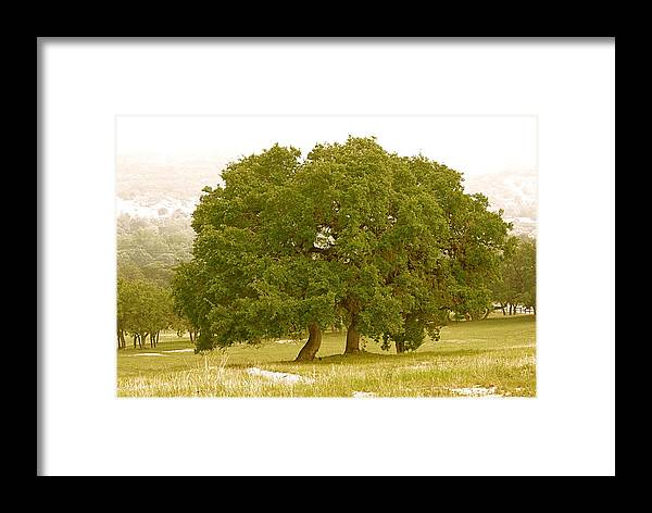 Live Framed Print featuring the photograph Lone Oaks by Gary Richards