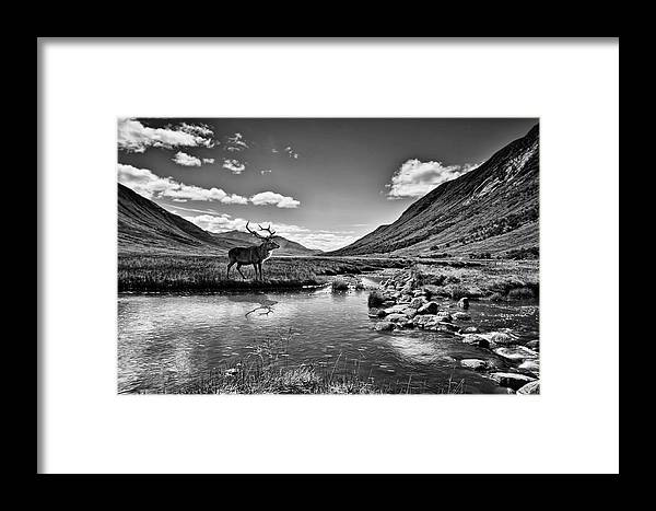 Stag Framed Print featuring the photograph Lone Stag by Sam Smith Photography