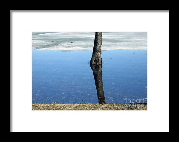 Tree Framed Print featuring the photograph Lone Tree In Water by Andre Paquin