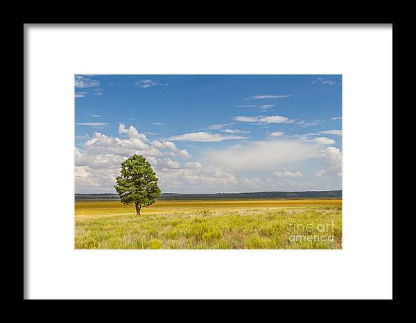 2011 Framed Print featuring the photograph Lone Tree by Nicholas Pappagallo Jr