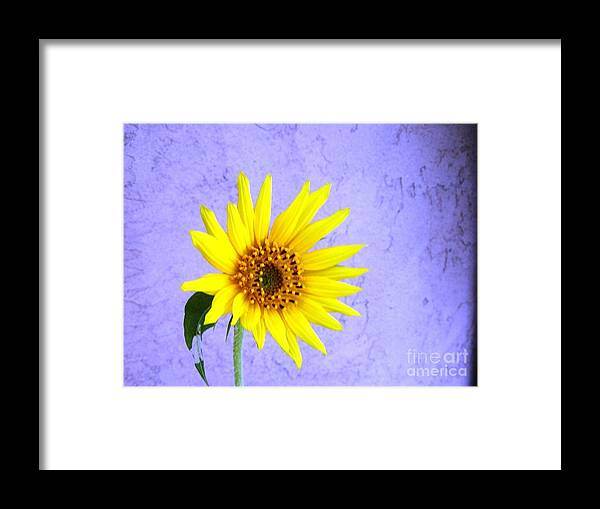 Daisy Framed Print featuring the photograph Lone Yellow Daisy by Jussta Jussta