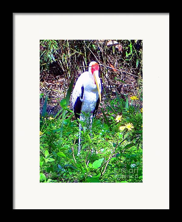 Bird Framed Print featuring the photograph Lonely Bird by Heather Morris