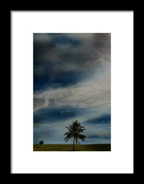 Palm Tree Framed Print featuring the photograph Lonely Palm by Joseph G Holland