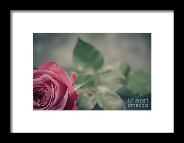 Valentine Framed Print featuring the photograph Lonely Rose 2 by Nel Saints