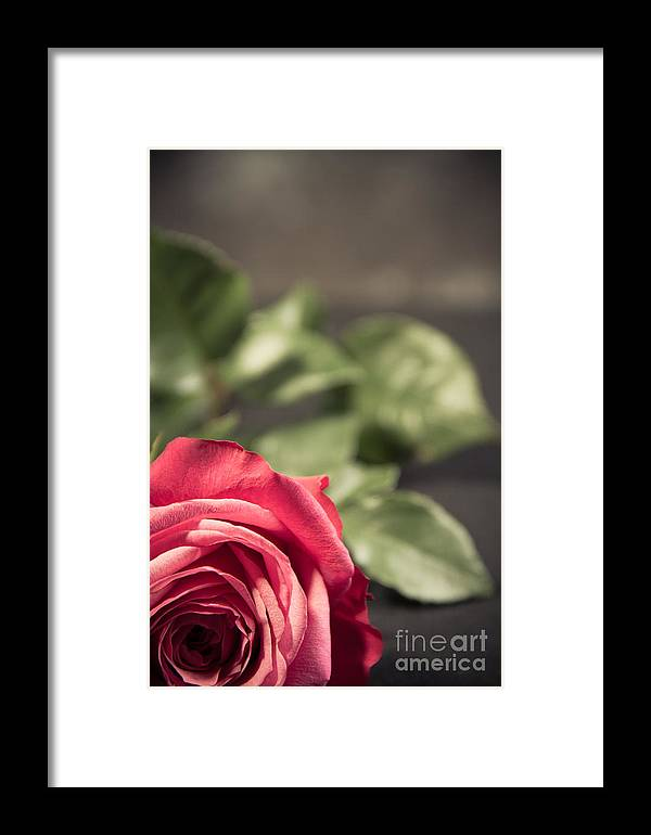 Valentine Framed Print featuring the photograph Lonely Rose 4 by Nel Saints