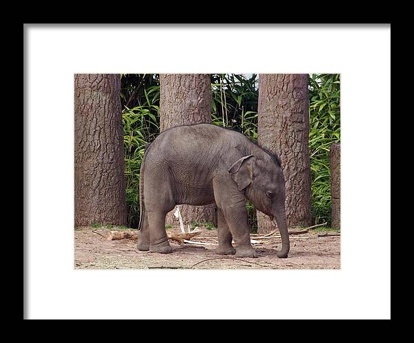 Elephant Framed Print featuring the photograph Lonesome by Susan Tinsley