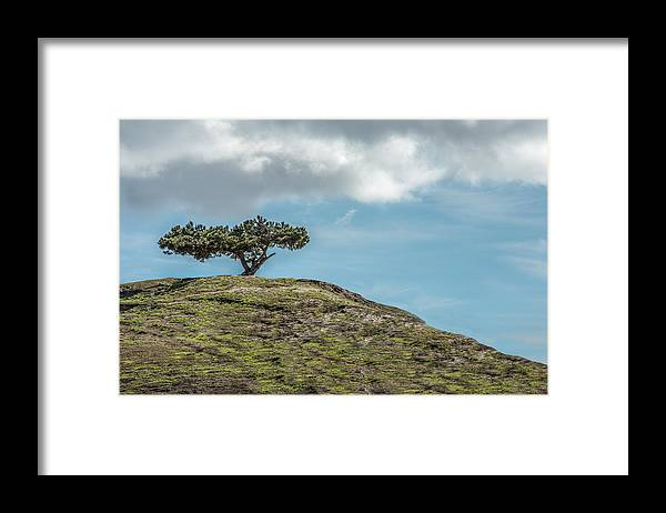 Tree Framed Print featuring the photograph Lonesome Tree by Paul Johnson