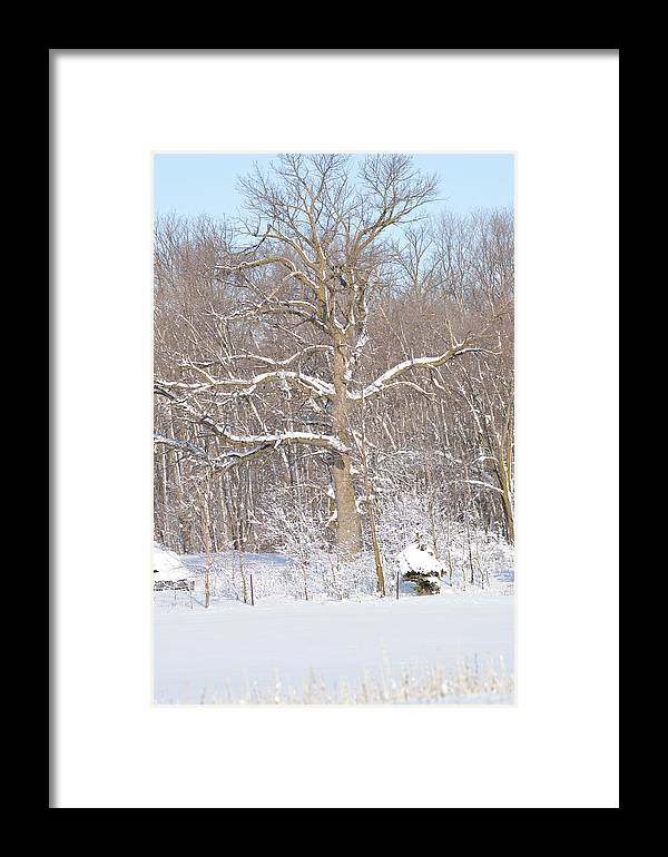 Nature Framed Print featuring the photograph Loney Ash by Dacia Doroff