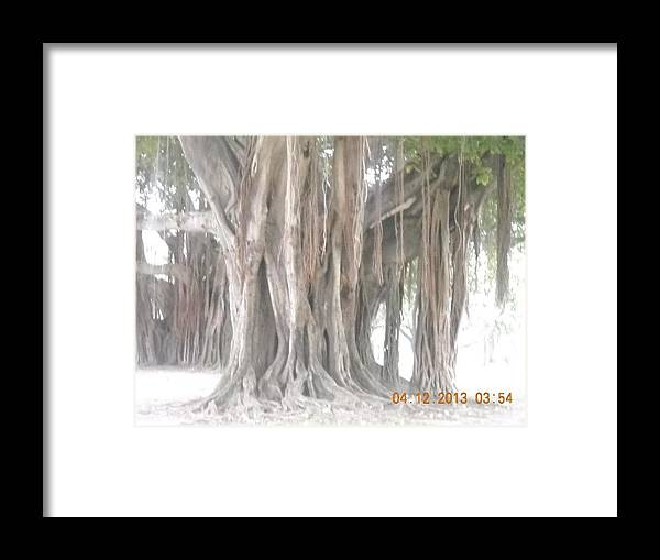 Nature Framed Print featuring the photograph Long Branches by Michelle Lawrence