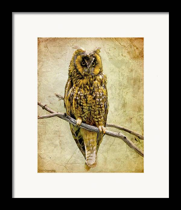 Owl Framed Print featuring the digital art Long Eared Owl by Ray Downing