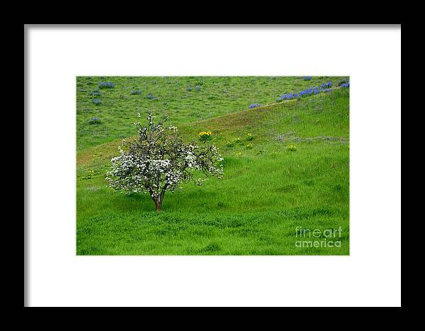 Meadow Framed Print featuring the photograph Long Forgotten by Mike Dawson