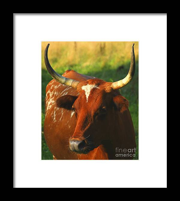 Longhorn Framed Print featuring the photograph Longhorn by Tony Reilly