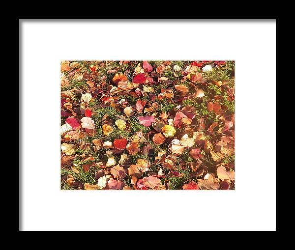 Nature Photography Framed Print featuring the photograph Look All Around by Steven Clayton