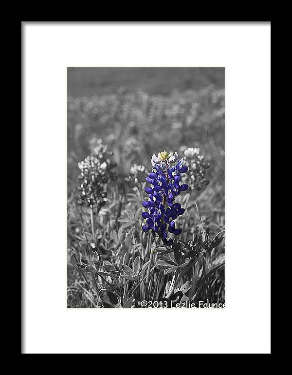 Bluebonnet Framed Print featuring the photograph Look At Me by Lezlie Faunce