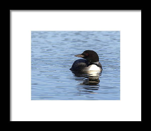 Doug Lloyd Framed Print featuring the photograph Look Away by Doug Lloyd