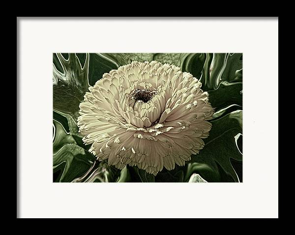 Digital Framed Print featuring the digital art Looking Back by Wendy J St Christopher
