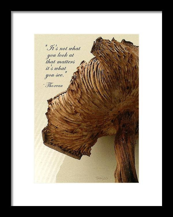 Quotes Greeting Cards Framed Print featuring the photograph Looking Beyond by James Temple
