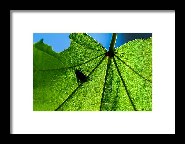 Abstract Framed Print featuring the photograph Looking For Blue Sky by Alexander Senin