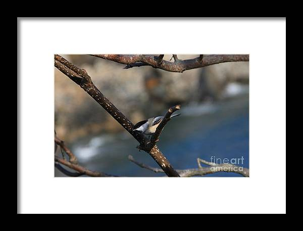 Bird Framed Print featuring the photograph Looking For Food by Michael Mooney