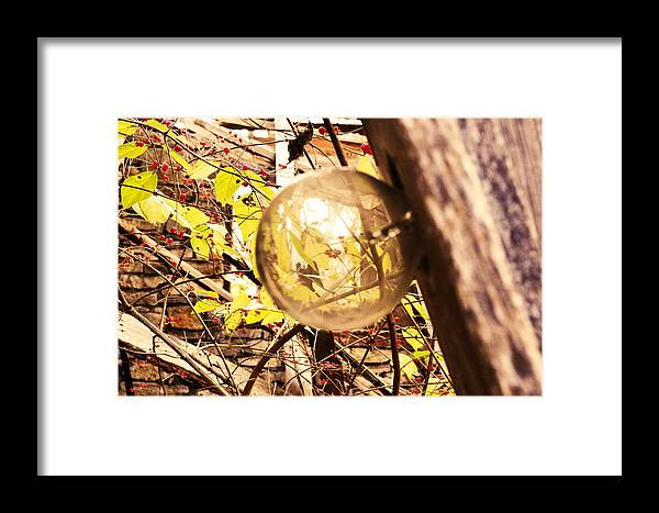 Macro Framed Print featuring the photograph Looking Glass by Michael Ludlum