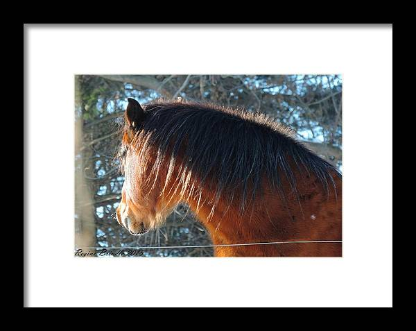 Horse Framed Print featuring the photograph Looking Into The Sun by Regine Brindle