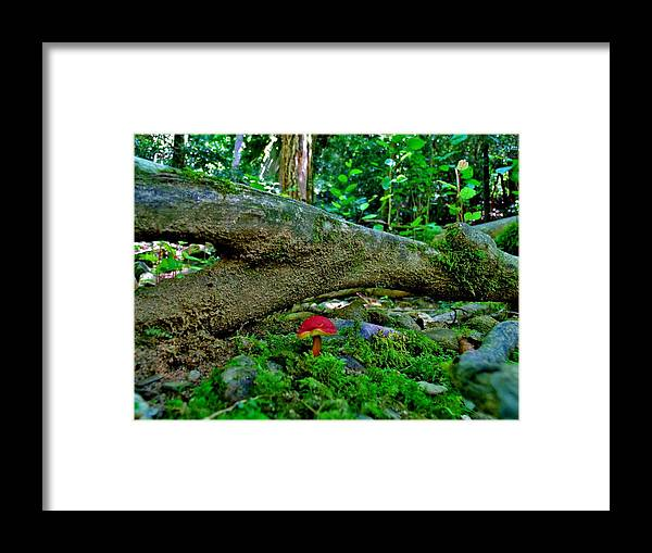 Framed Print featuring the photograph Lost In The Woods by Hominy Valley Photography