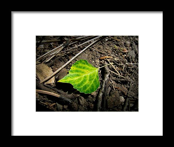 Goldwater Lake Framed Print featuring the photograph Lost On The Forest Floor by Aaron Burrows