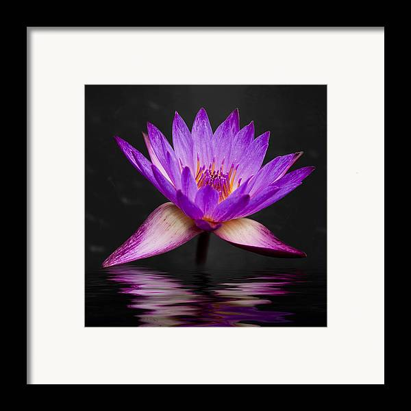 3scape Photos Framed Print featuring the photograph Lotus by Adam Romanowicz