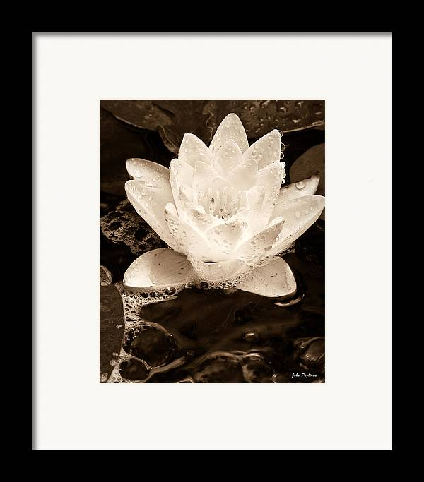 Aquatic Framed Print featuring the photograph Lotus Blossom by John Pagliuca
